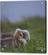 By The Pond Acrylic Print