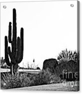 Cactus Golf Acrylic Print