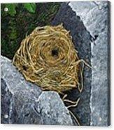 Campagnol Nest Acrylic Print