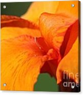 Canna Lily Named Wyoming Acrylic Print