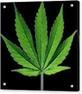 Cannabis Leaf On A Black Background Acrylic Print