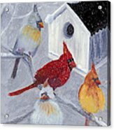Cardinals In The  Snow Acrylic Print