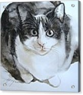 Cat In Black And White  Acrylic Print