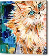 Cat Orange Acrylic Print