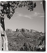 Cathedral Rock Framed By Juniper In Sedona Arizona Acrylic Print