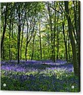 Chalet Wood Wanstead Park Bluebells Acrylic Print