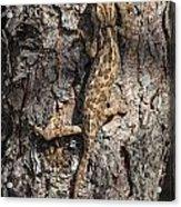 Chameleon Climbing Acrylic Print