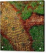 Chameleon Acrylic Print