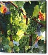 Chardonnay Au Soliel Acrylic Print