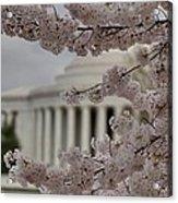 Cherry Blossoms With Jefferson Memorial - Washington Dc - 01133 Acrylic Print