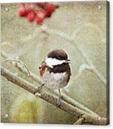 Chickadee In Winter Acrylic Print