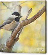 Chickadee With His Prize   Acrylic Print