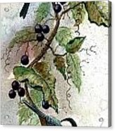 Chickadees And Blueberries Acrylic Print
