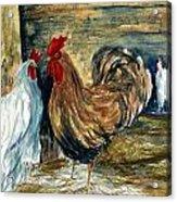 Chicken Coop Acrylic Print