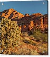 Cholla Cactus And Red Rocks At Sunrise Acrylic Print