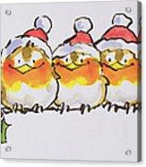Christmas Robins  Acrylic Print