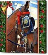 Cleveland Bay Horse Christmas Card Acrylic Print