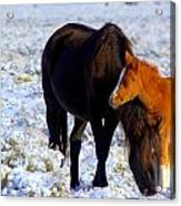 Close To You  Acrylic Print by Jeanne  Bencich-Nations