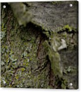 Closeup Of Bark Covered In Lichen Acrylic Print
