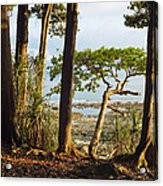 Coastal Rainforest Havelock Isl India Acrylic Print