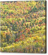 Colorful Autumn Forest In Mount Blue State Park Weld Maine Acrylic Print