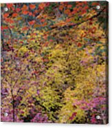 Colorful Leaves On A Tree Acrylic Print