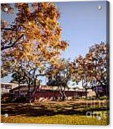 Colorful Trees Of Long Beach In The Autumn Acrylic Print