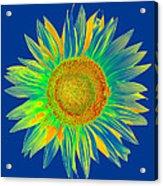 Colourful Sunflower Acrylic Print