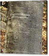 Common Beech (fagus Sylvatica) Acrylic Print