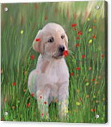 Computer Generated Portrait Of A Dog Acrylic Print