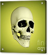 Conceptual View Of Human Skull Acrylic Print by Stocktrek Images