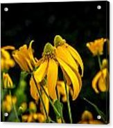 Coneflowers Echinacea Yellow Painted Acrylic Print by Rich Franco