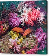 Coral Reef Scenery Acrylic Print