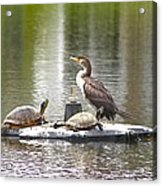 Cormorant And Turtle Duo Acrylic Print