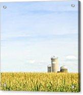 Corn Field With Silos Acrylic Print