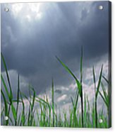 Corn Plant With Thunderstorm Clouds Acrylic Print