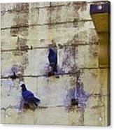 Couple Of Pigeons On A Wall Acrylic Print