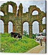 Cow By Second Century Aspendos Aqueduct-turkey Acrylic Print