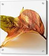 Cranberry Tree Leaf Isolated On White Acrylic Print