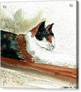 Crazy Cat Acrylic Print