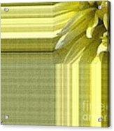 Dahlia Named Canary Fubuki Acrylic Print