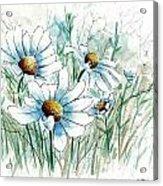 Daisy Patch Acrylic Print