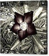 Dark Acrylic Print by Chasity Johnson