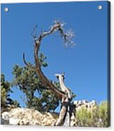 Dead Tree At Grand Canyon Acrylic Print