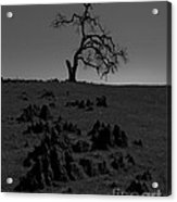 Death Of An Oak Tree Acrylic Print