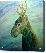 Deer At Home Acrylic Print