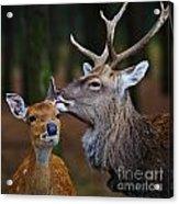 Deer Love Acrylic Print
