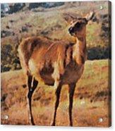 Deer On Mountain  Acrylic Print