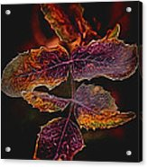 Detailed Leaves Acrylic Print
