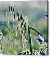 Dew Drops On Grass Acrylic Print